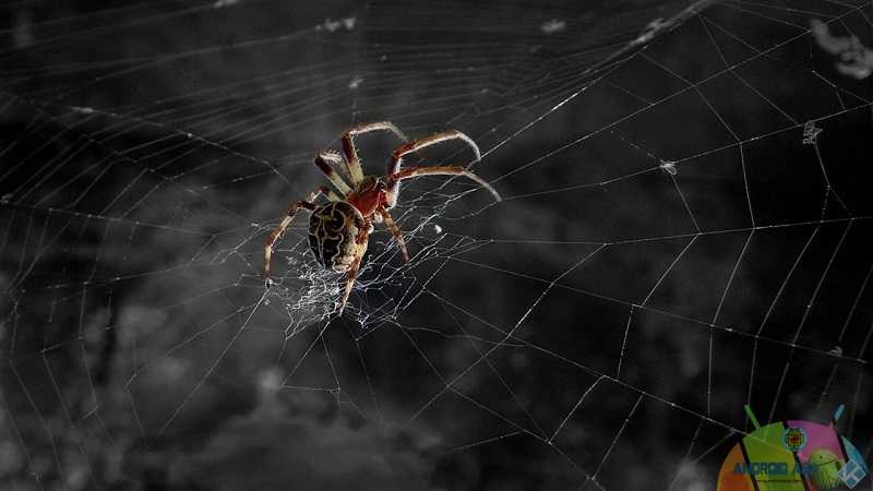 arachnid fanart
